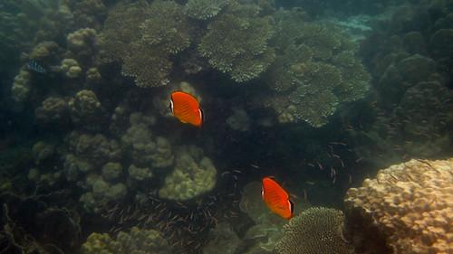 koh Phangan Snorkel Salad Beach コパンガン サラダビーチでシュノーケル9