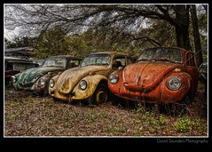 Do you know what really bugs me? (Dave the Haligonian) Tags: red leaves vw yard bug volkswagen junk rust florida beetle salvage type1 nothdr copyrightallrightsreserved davidsaunders davethehaligonian img3980b