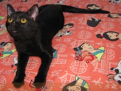 Bela (laryleal) Tags: cat canon eyes olhos gato gata salto pulo sx10 laryleal larissaleal