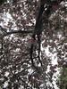 IMG_2923 (shame00) Tags: cadogangardens may2010 may12010