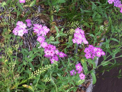 100502-pinkflowerbunch3-altered