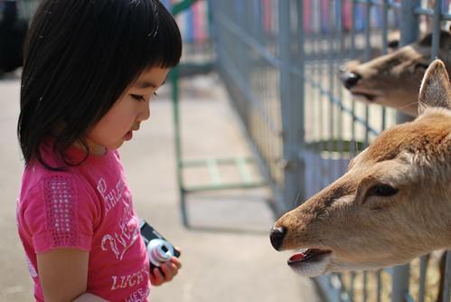 meets deers