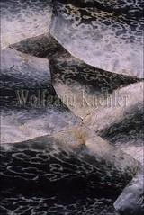 00032494 (wolfgangkaehler) Tags: canada closeup tent inuit northamerica northwestterritories nunavut hudsonbay baffinisland capedorset northamerican sealskin northwestterritory baffinislandcanada hudsonbaycanada inuitscene capedorsetcanada