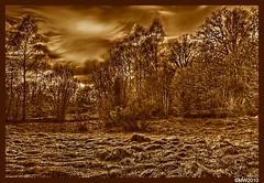 Hdr Landscape (Maxx W) Tags: landscape gimp sigma hdr dp1 qtpfsgui