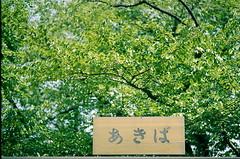 あきば (Nam2@7676) Tags: film japan tokyo dof pentax bokeh scan 日本 epson 東京 100 asakusa dnp 浅草 lx nam2 centuria 77mm silverfast kmount 7676 v750 fa77 smcpfa77mmf18 justpentax gtx970 smcfa77mm118limited yasunarinakamura ナムナム nam27676 中村康就