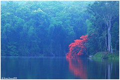 Beauty n Reds - Parambikulam Tiger Reserve!! (Naseer Ommer) Tags: trees red green water beauty canon forests waterscape gulmoha