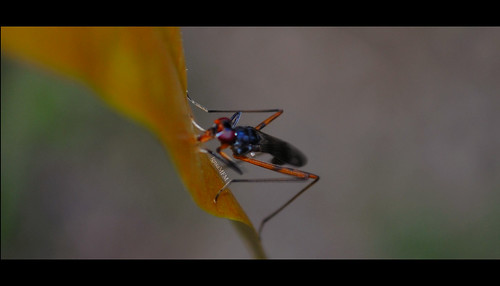 serangga2