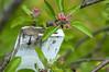 (Per Erik Sviland) Tags: flower macro closeup garden nikon bokeh relaxing micro erik per sandnes d300 pererik nrway sviland sqbbe pereriksviland