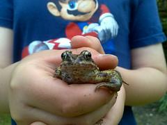 Kermit! :-) (Podknox) Tags: mobile eyes wildlife nintendo frog kermit supermario gardenwildlife phreadz