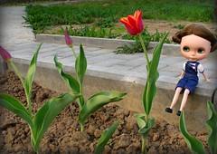 Mimi and tulips