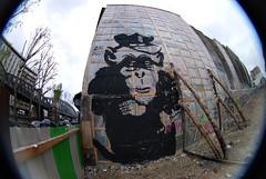 Zoo Project (lepublicnme) Tags: streetart paris france animal graffiti may fisheye 2010 singe peleng zooproject pelengmonkey