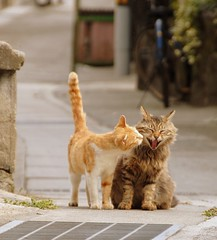 ONOMICHI DAYS~Happy Cats (junog007) Tags: from camera love animal japan cat spring alley nikon kiss hiroshima fav d200 straight onomichi senkoji bestofcats flickraward platinumheartaward nikonflickraward platinumheartshalloffame thecatwhoturnedonandoff nikonflickrawardgold platinumpeaceaward tripleniceshot flickraward5 nikonflickrawardplatinum mygearandmepremium mygearandmebronze mygearandmesilver mygearandmegold mygearandmeplatinum senkojiyama