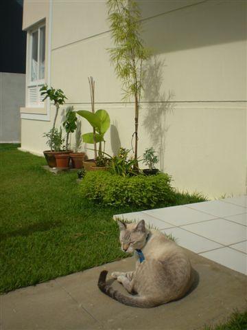 casa frente maio 2009 por você.