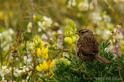 Sparrow and Flowers