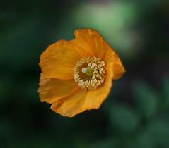 Orange and Green (yamahagarn) Tags: belfast northernireland mygarden bokehlicious flickraward beyondbokeh newgoldenseal mygearandmepremium mygearandmebronze ringexcellence