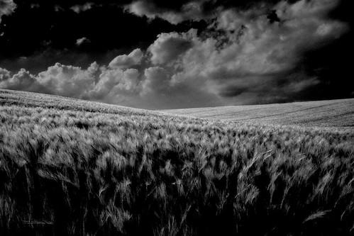 フリー写真素材, 自然・風景, 草原, 丘, モノクロ写真, ドイツ,