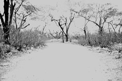 The Harvest of Sorrow (purplerock13) Tags: road old trees sky people white black vintage dead death peace sad path empty branches birth gray taken mind lonely 365 blacknwhite success less infinite gravel project365