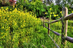 dynamic HDR yellow flowers