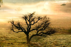 Quando nasce o dia... (mauroheinrich) Tags: sol brasil nikon aurora inverno gauchos riograndedosul frio pampa querencia gaucho gacho alvorecer raiar 18200vr ibirub fotgrafosbrasileiros fotgrafosgachos desponte fotgrafosdosul