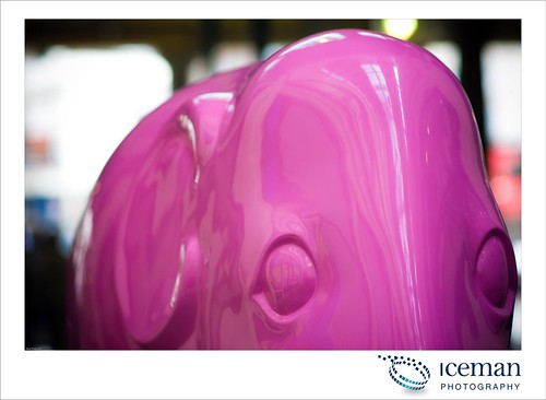 010-Pink Elephant