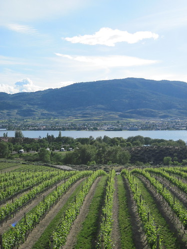 Vineyards and Osoyoos Lake