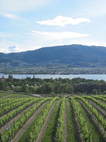 Vineyards and Osoyoos Lake