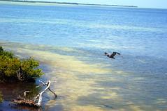 Isla de los pájaros II (ruvalcaba) Tags: sea beach méxico island mar sand playa whitesand isla marcaribe caribe quintanaroo holbox caribeansea arenablanca