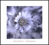 Afrodita (Jose Luis Mieza Photography) Tags: flowers flores flower fleur fleurs flor fflower benquerencia florews reinante jlmieza reinanteelpintordefuego joseluismieza