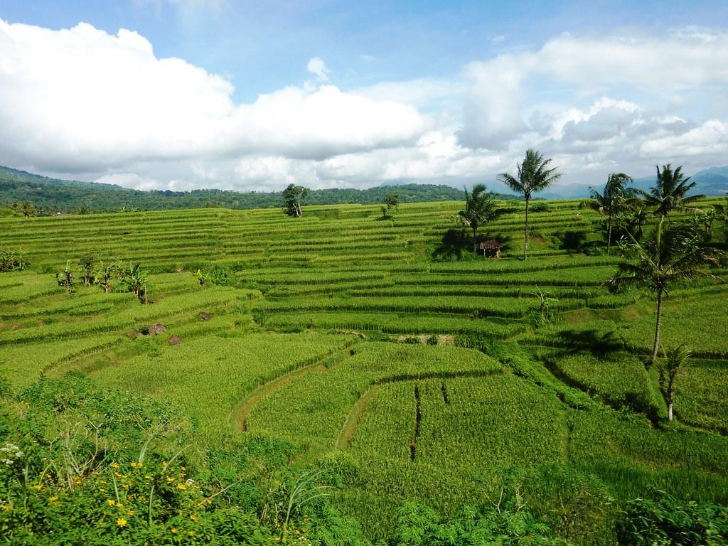 Java-Bandung-Yogyakarta (22)