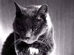 Essere stanca (lorenzog.) Tags: bw italy animals cat canon italia 2010 psipsi canoniani updatecollection ilobsterit
