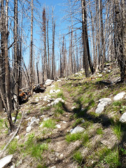 The forest was thinned out down in the drainage, with a lot of ghost forest in sections up higher from the Tripod Fire.