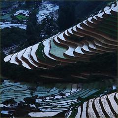 Dusk Rice Paddies Work of Art (NaPix -- (Time out)) Tags: mountain art nature night work river landscape artwork asia rice dusk vietnam paddies natu napix