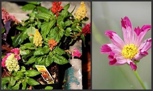 Flowers 6.17.2010