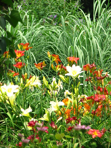daylilies backed by pampas grass