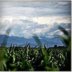 su verso il cielo (* onda *) Tags: clouds shadows emotions uptothesky