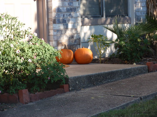 Pumpkins Spotted!