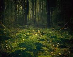 The trusting woods (soleá) Tags: trees light holland tree green art nature beautiful beauty dutch forest landscape photography photo europe foto fotografie surreal mysterious carmen drenthe solea soleá carmengonzalez