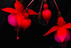 Nature's Lanterns!