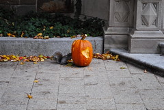 Squirrelween (Wires In The Walls) Tags: halloween pumpkin squirrel university connecticut deadleaves ct newhaven yale carvingpumpkin