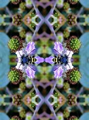 CALEIDOSCOPIO DE ABEJA (GABRIEL,LUIS) Tags: en espaa plant planta spain kaleidoscope bee abeja caleidoscopio 060 mora grupos mygearandme ringexcellence httpballoonaprivatthumbloggercom engrupos