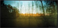 deep forest (mypho.de) Tags: autumn trees color tree rollei forest mediumformat landscape holga pinhole noise lochkamera uwa wideangel c41 mittelformat 6x12 f135 120° ultrawideangel holga120wpc digibasecn200pro toycamvignette