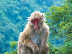 Worries (i_amSoumadev) Tags: wilderness apes moody nature westbengal siliguri sevak