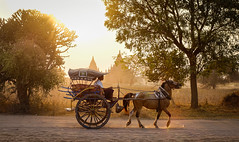 Horse cart on rural road in Bagan, Myanmar (phuong.sg@gmail.com) Tags: archeology architecture art asia asian attraction bagan buddhism buddhist burma burmese carriage cart culture dirt exploring heritage horse landmark myanmar pagoda religion religious revered road serene sightseeing southeast stupas temple theravada tour tourism tourist tourists tradition traditional tranquil travel wagon worship