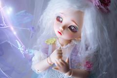 Clap if you believe in fairies... (assamcat) Tags: fairyland littlefee rendia bjd fairies canon macro