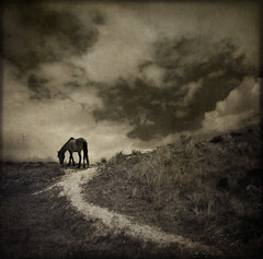 old day blues (biancavanderwerf) Tags: light horse dutch dark square mono sand dunes bianca silhouet dreamcatcher topseven specialpicture graphicmaster ldlnoir