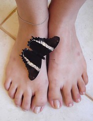 lol (Mh :)) Tags: feet animal butterfly toes borboleta ps sorte 365days