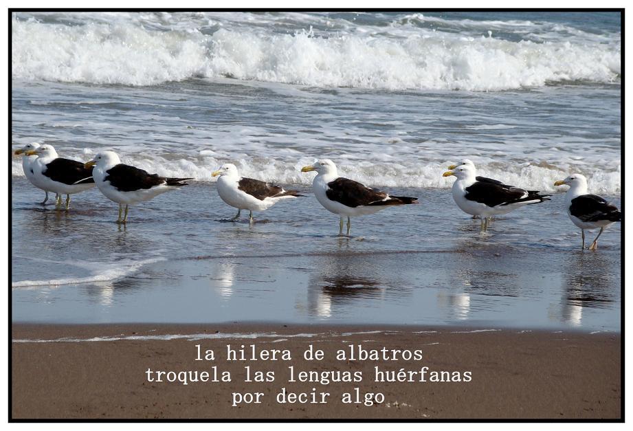 albatrosb