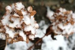 IMG_5748 (Ateupamateur) Tags: snow snowing winterweather winterscenes