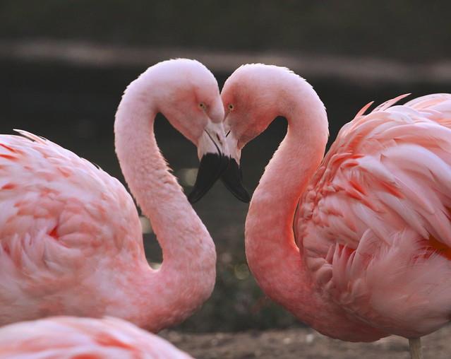 L*O*V*E birds  :)