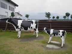 花蓮 吉蒸牧場